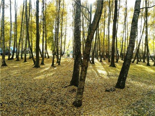 Осень, осень ... как ты хороша...( наше фотонастроение) - Страница 7 Bb2ccc2d3589