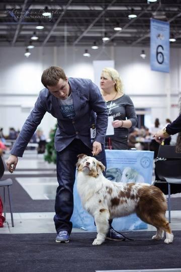 Выставочные успехи наших собак - 5 - Страница 30 75f61350576e