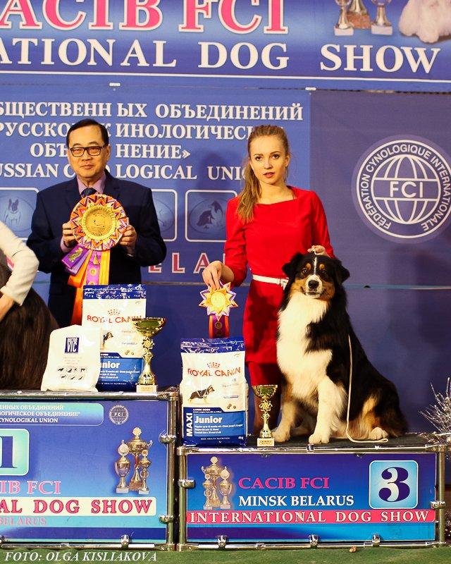 Выставочные успехи наших собак - 5 - Страница 30 87b41dcacd1a