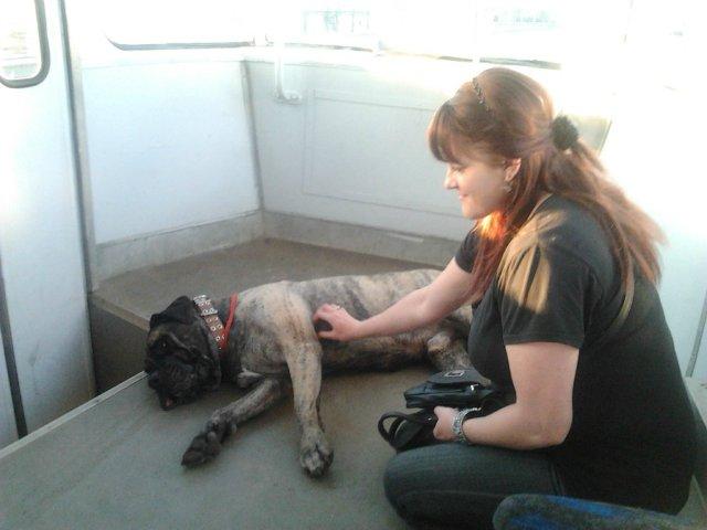 Наши собаки, друзья и гости, кот Мензурка - Страница 4 15a5c40e0a4d