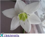 Красота без границ - Страница 3 53643c111f53t