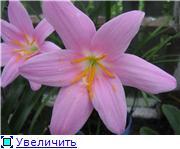 Красота без границ - Страница 2 D387045320f1t