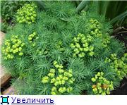 Растения - агрессоры 5a38fe4bc0f2t