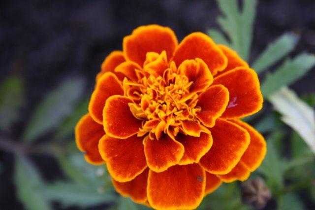 Растения от FILIGERa - Страница 2 Db979a8292e0