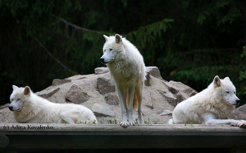 Швейцарский зоопарк 5416c1dd1f59