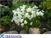 Растения для альпийской горки. C9ac572deb5dt