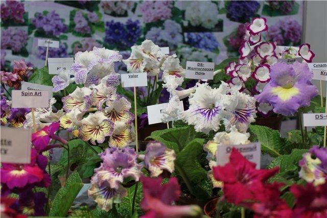 XIX Международная выставка Ландшафт и Приусадебное хозяйство-2012 5874d81d83de