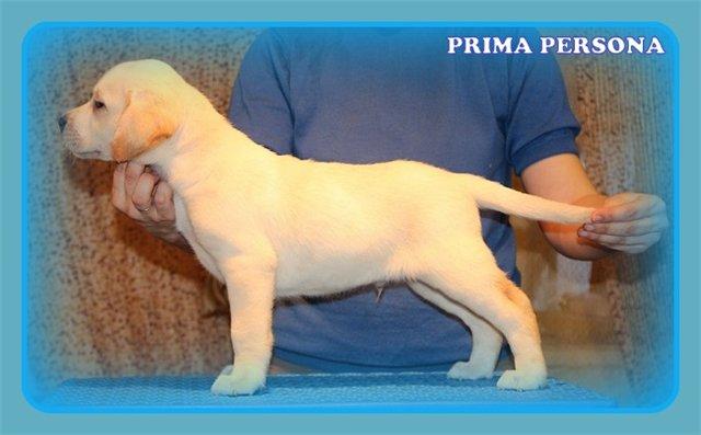 """Питомник """"Прима Персона"""". Мои собаки-моя жизнь! - Страница 2 14b2b107379a"""