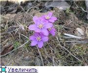 Весенне цветущие D665762ff0d0t
