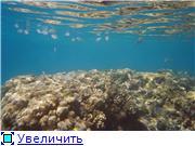 Египет.Курорт - Эль Гуна.Отдых и рыбалка 4029b975cad2t