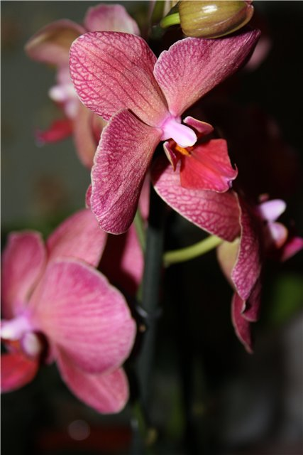 Растения от FILIGERa - Страница 3 7968b91bf299