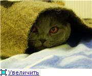 Украиночкины хвастушки 74b213c82fe1t