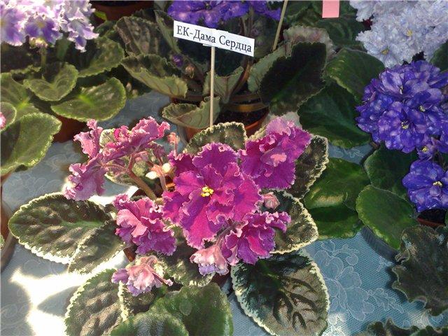 «Цветы.Ландшафт и Приусадебное хозяйство Весна - 2010» 467fc2462154