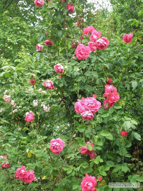 Крым. Никитский ботанический сад. 3ae9fad31e46