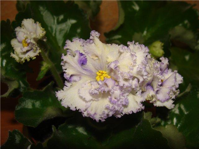 Весеннее  цветение (Хваст от Веры) - Страница 2 48bfea333f5b