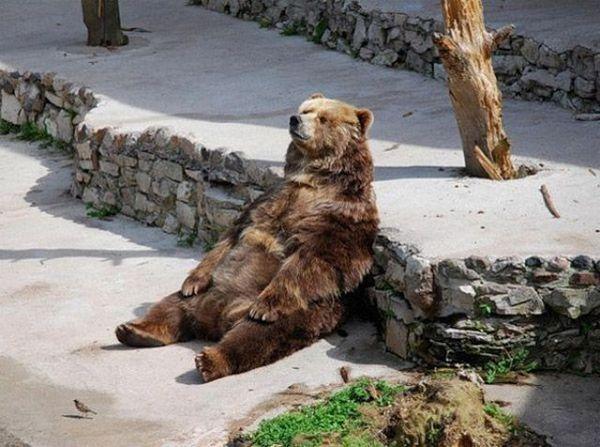 Ничто человеческое медведям не чуждо Db8993de6472