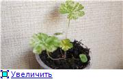 Цветы - Страница 2 129634c38aa1t