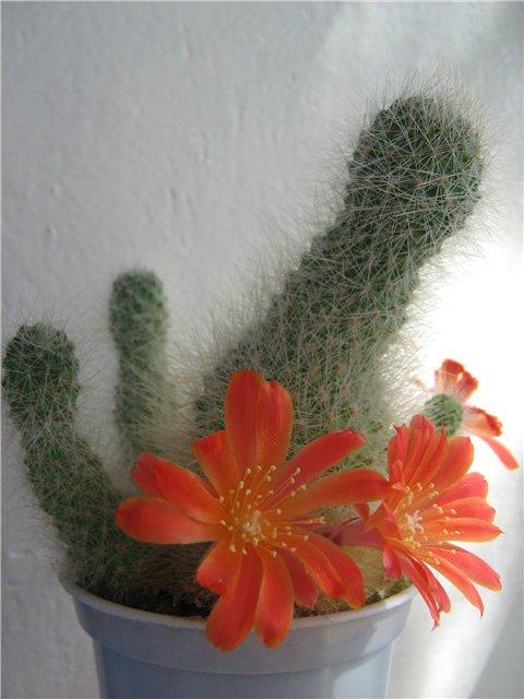 Моё цветочное богатство - Страница 21 Eec1118e2a88