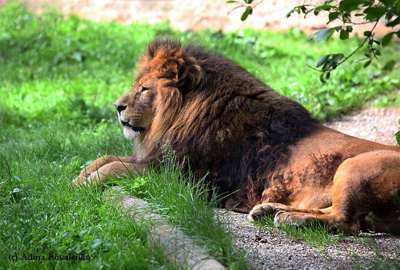 Швейцарский зоопарк F4ca083b8d21