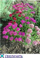 Лето в наших садах - Страница 5 7fe30d63efa1t