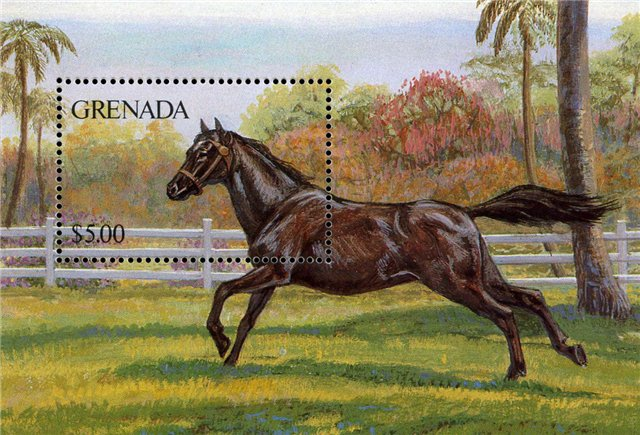 Pferde - Seite 3 Cb89a1ff763f