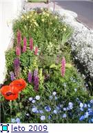 мои цветочки E95cafc5b873t