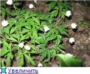 Весенне цветущие 5c1b9d584b13t