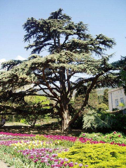 Крым. Никитский ботанический сад. D6b300a99f09