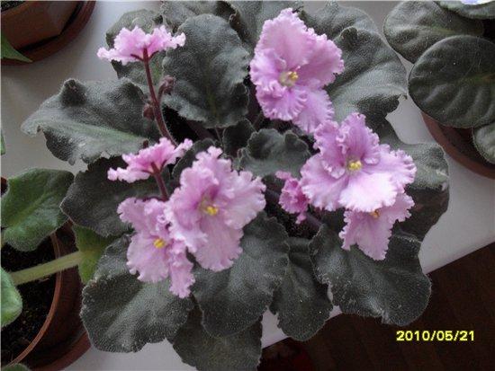 Мой маленький садик 7bdb507c9453