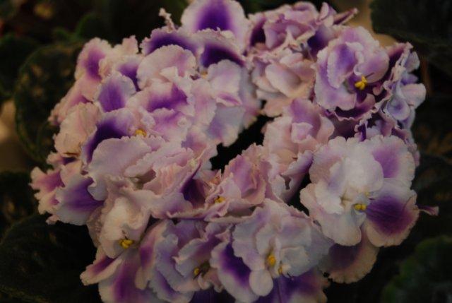 Международая выставка «Цветы.Ландшафт .Усадьба 2010» Астана - Страница 2 C628ef76c7f9