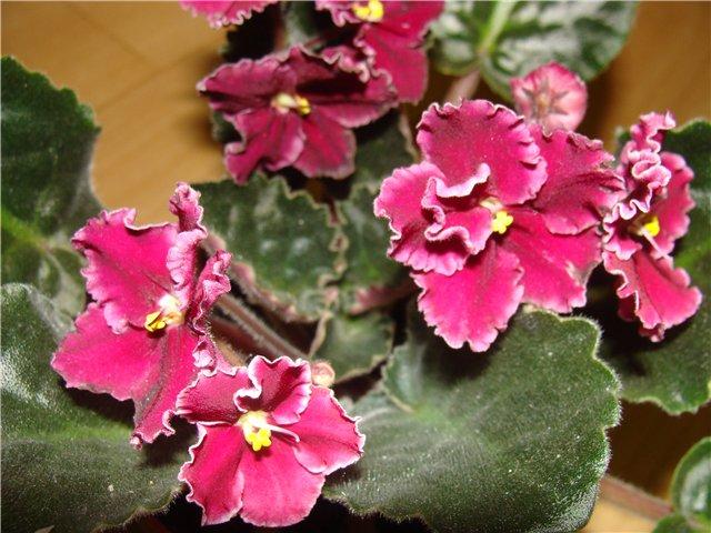 Весеннее  цветение (Хваст от Веры) - Страница 4 803706109f2b
