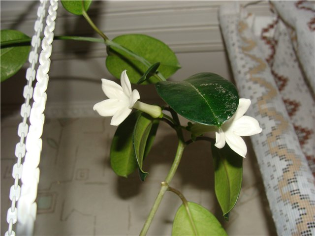Весеннее  цветение (Хваст от Веры) - Страница 4 78bdaa6a1bd1