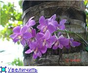 Орхидеи и прочая красота на о. Пхукет 58d36ac84864t