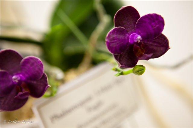 Выставка орхидей в Государственном биологическом музее им. К.А.Тимирязева 73217a285fca