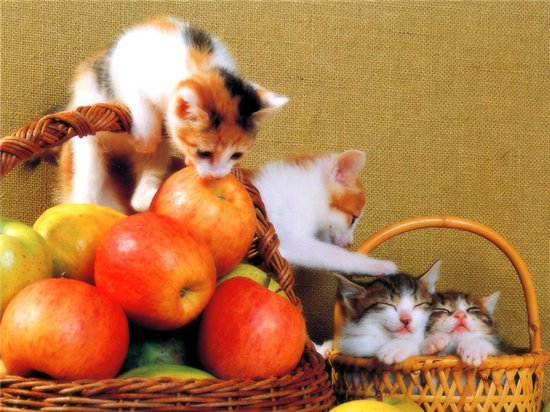 Фотографии кошек F342d73a5d72