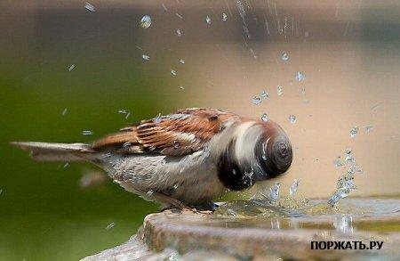 Фото птиц 21b960a7a9e3
