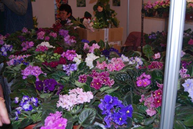 Международая выставка «Цветы.Ландшафт .Усадьба 2010» Астана - Страница 3 Cb8ad18be91e