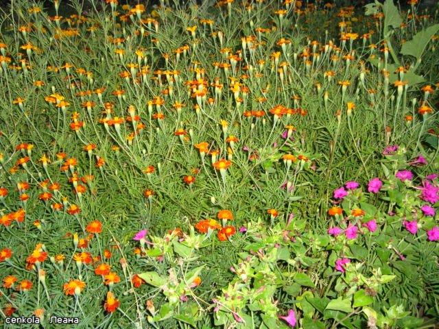 Разводите ли дома цветы и какие? - Страница 27 67fd89710132