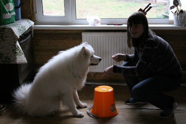 Недельные курсы повышения квалификации для собакообожак :-) Приглашаем всех!!! - Страница 3 C7ee754b2e0d