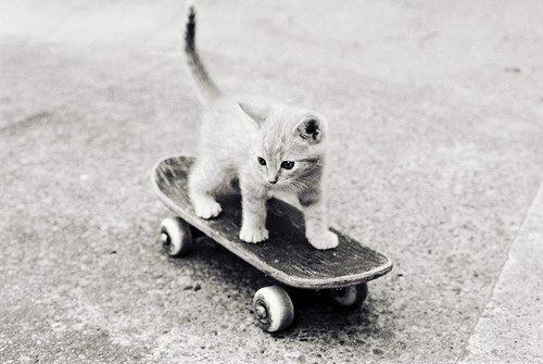 Foto bardh e zi! Black-and-white-cat-cute-photography-Favim.com-585289