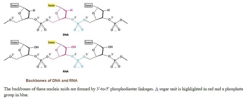 The RNA world, and the origins of life Asasddas