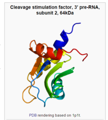 The RNA polymerase enzyme and its function, evidence of design CSTF2_Wikipedia_the_free_encyclopedia