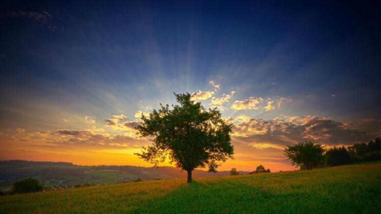 Drvo             Image