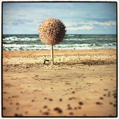 Goran Tribuson-Dublja strana zaljeva - Page 2 Dream_Beach_by_Kleemass