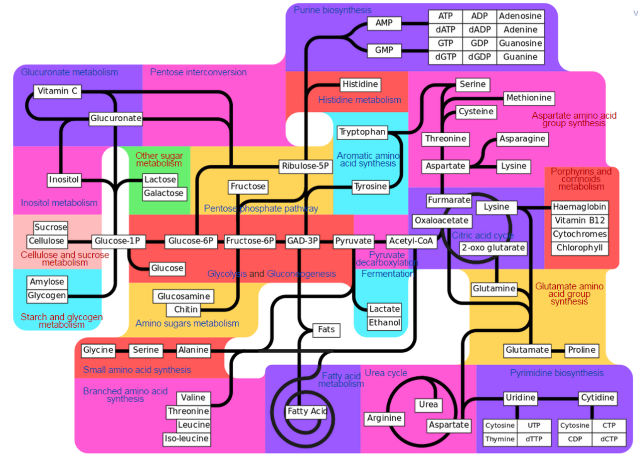 Major metabolic pathways and their inadequacy for origin of life proposals Metabolic_pathway_Wikipedia_the_free_encyclop