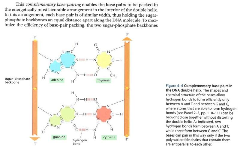 The DNA double helix - evidence of design Xxxxxxww