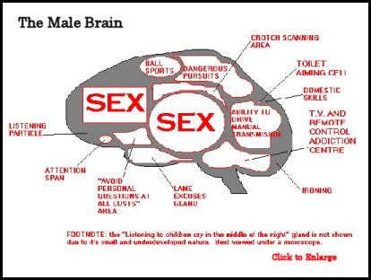 Evening Classes for Men Brain_male_sm