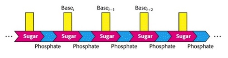 The RNA world, and the origins of life Asdasas