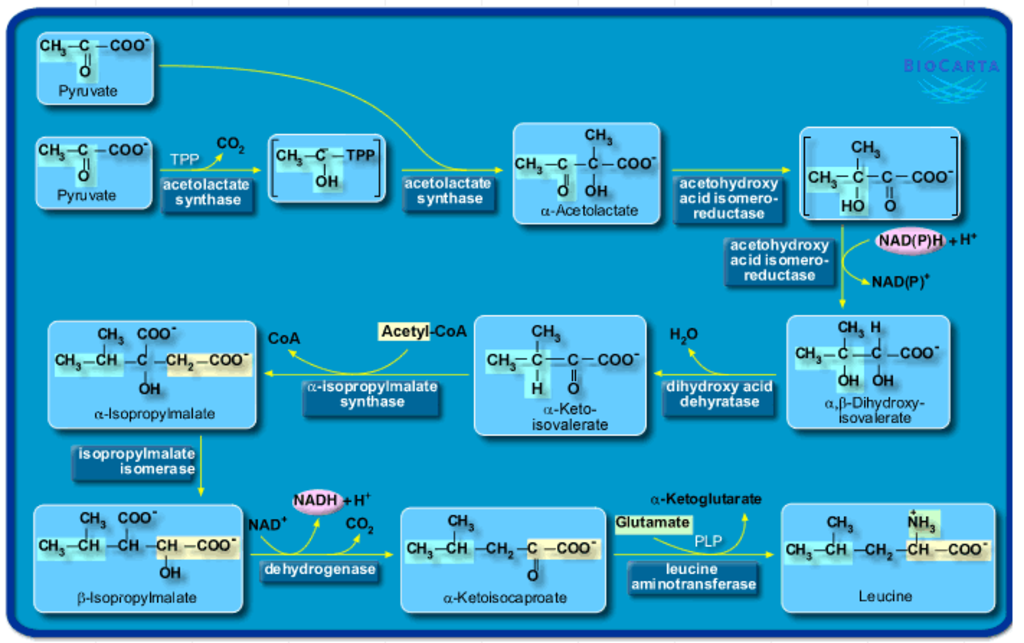 Amino Acids: Origin of the canonical twenty  amino acids required for life Bio_Carta_Charting_Pathways_of_Life