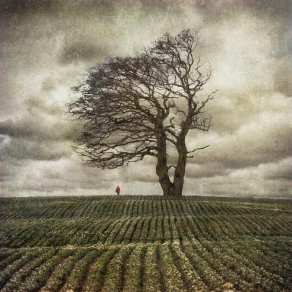 Bijesne lisice - Goran Tribuson Oaks_by_Kleemass